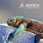 AURORA EXPEDITIONS ECUADOR & GALAPAGOS 2017-18 (BROCHURE)