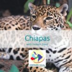 CONTOURS TRAVEL – CHIAPAS, MEXICO