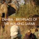 ZAMBIA – BIRTHPLACE OF THE WALKING SAFARI
