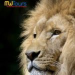 MW TOURS AFRICA 2018-2019 (BROCHURE)